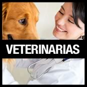 flyer veterinarias